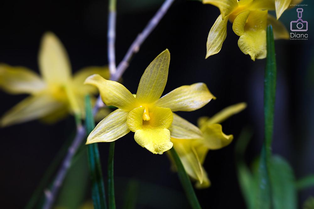 орхидеи, цветы, ботанический сад