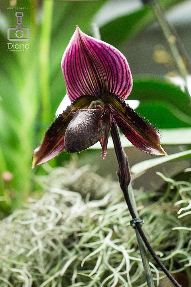 редкие орхидеи, цветы, ботанический сад