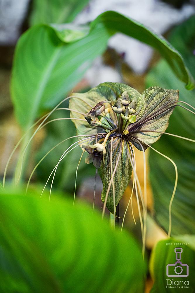 орхидеи, цветы, оранжерея