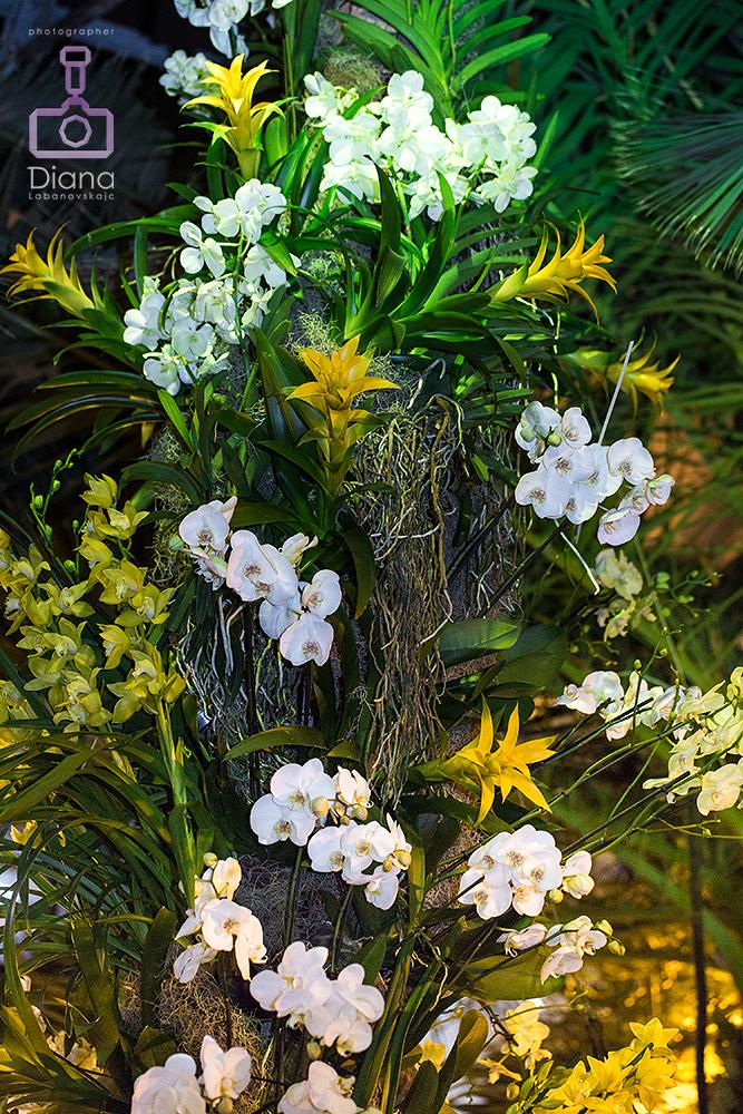 орхидеи, виды, цветы
