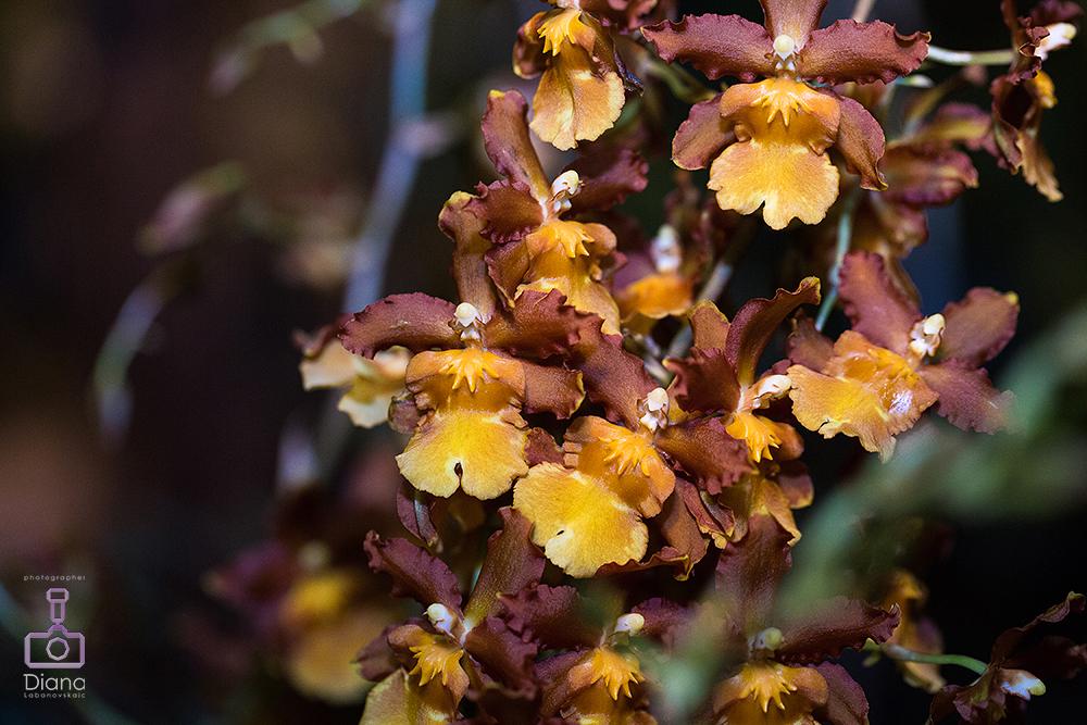 орхидеи, цветы, ботанический сад МГУ